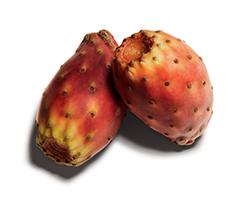 선인장 열매 오일